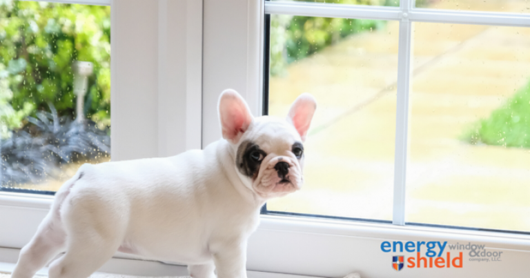 Puppy standing by the door  - The Benefits of Automatic Doors for Pets - Energy Shield Windows and Doors